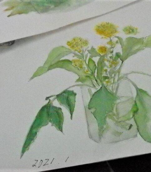 草花を描く