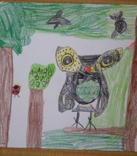 フクロウのいる森